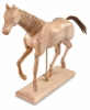 Horse Manikin